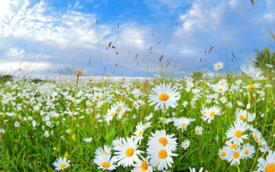 Vi på Crozz önskar dig en härlig sommar!